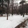 井の頭公園。