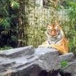 動物園行ってきました(^^)