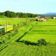 近江の田園風景!