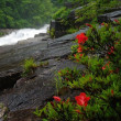 雨の赤沢渓流 木曽川サツキ