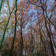 森のある幸せ