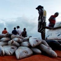 検査不合格により対EU魚輸出を停止  ブラジル