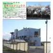 花巡り 「桜-その496」 古河ゴルフリンクス