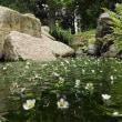 26日、京都府立植物園からの夏だより
