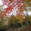 大津谷林道(愛知県民の森)