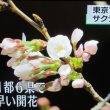 2018年(平成30年)3月17日(土)東京ソメイヨシノ開花宣言