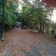 四季2018(14)紅葉・落ち葉の季節 庭掃除、特に袋詰めが大変