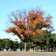 皇居前の木