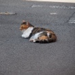 ニャンの初夏 ( & ニャンの飼い猫暮らし )の巻