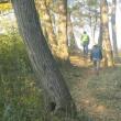 秋の彩の国・・・比企の丘・・・石坂の森・・・をブラブラと