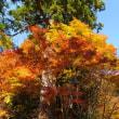 大矢田神社の楼門と紅葉