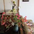 つつじの花が 花材としてやってきました!