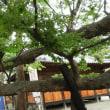 生島・足島神社 帰途つばめの雛とキツネに遭遇