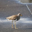 9月18日の鳥撮り・・・