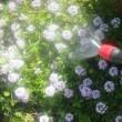 庭の水やり用に蓄圧式噴霧器を買いました