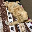 猫、気持ちよく寝る