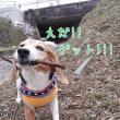 お花見三昧_4
