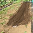 第3弾の< トウモロコシ >は省エネの植え付けで