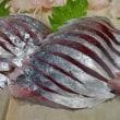 自家製「生ら(なまら)〆さば」のできたてほやほやバージョン♪「究極の生ら(なまら)〆さば」☆彡刺身と手作り干物の専門店「発寒かねしげ鮮魚店」。