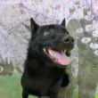 明後日の土曜日は【わんこ整体day】  犬のしつけ教室@アロハドギー