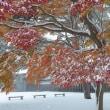 """景色を変えた、突然の""""大雪""""..."""