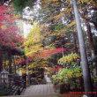 紅葉ベストシーズンに大雄山を訪れる