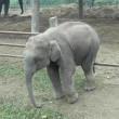 サーカスの象の話
