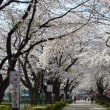 那須・千本松牧場と烏山公園の桜