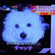 4/25 この子がバーバラの犬