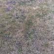 芝生の雑草 2018