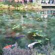 名もない池 モネの池