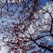 青空でも、晩秋という気温になってきました。
