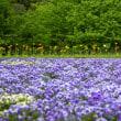 季節が早いとっとり花回廊