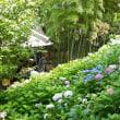 鎌倉長谷寺の紫陽花まつり