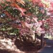 琵琶湖紅葉八景