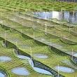 美しい青さ海苔養殖場 (浜島町 迫子)