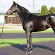 【ジェイエス・秋季繁殖馬セール2018】の「オンラインカタログ(ブラックタイプ)」が公開!