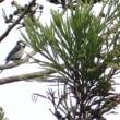 最近の野鳥たち