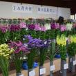 道の駅和田浦ワオ!で なの花まつり(南房総市和田)
