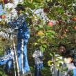 1年生のリンゴ狩り(2017.11.19)