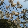 駕与丁公園の桜