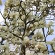 春爛漫のハウステンボス