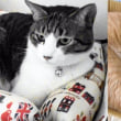 涼しくなって、お気に入りの場所で寝る猫こむぎ&だいず【猫日記こむぎ&だいず】2017.09.14