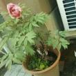 トマトやナス家庭菜園