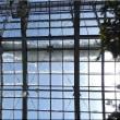百合が原・温室の花