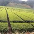 新茶前のお茶生産者とお茶屋