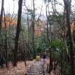 わんぱく自然探検隊の 秋の活動