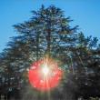 公園のツリー