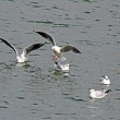 浄水場前の水鳥