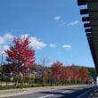 秋の松江散歩